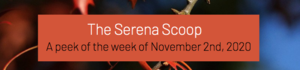 The Serena Scoop 11/2